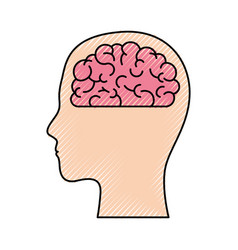 human face silhouette with brain inside in colored vector image