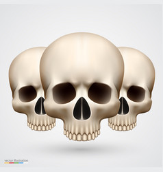 Human tree skulls isolated on white vector