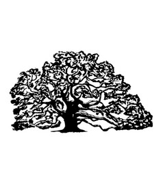Old oak tree on a white background vector