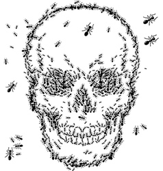 skull sketch design with ant isolate on white vector image