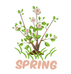 blooming tree isolated vector image
