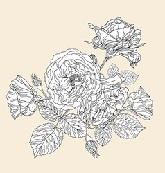 hand drawn decorative roses vector image