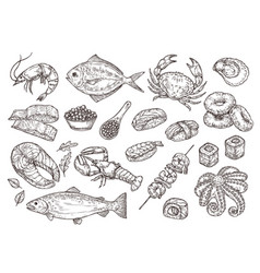 hand drawn seafood natural oyster squid caviar vector image
