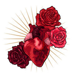 human heart with red roses in tattoo style vector image