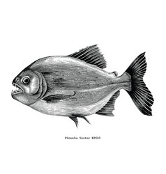 piranha hand drawing vintage engraving vector image