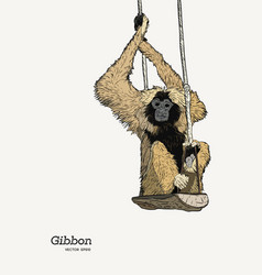 Gibbon monkey sketch graphic drawing vector