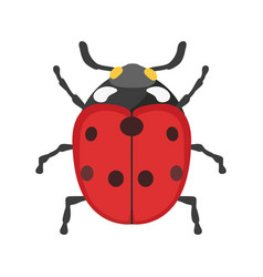 insect ladybug icon flat isolated vector image