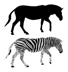 zebra black and colored drawings vector image