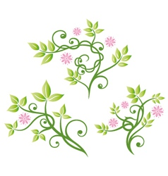 Floral elements ornament vector image vector image