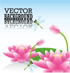 Lotus flower and dragonflies vector image
