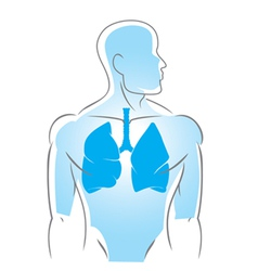 internal organs lungs vector image vector image