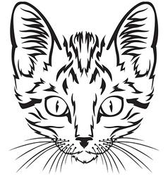 kitten muzzle vector image