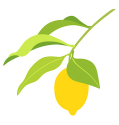 lemon on branch with leaves vector image