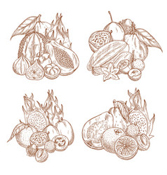 Sketch harvest of tropical exotic fruits vector