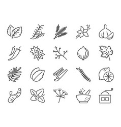 spices and herbs icon set vector image
