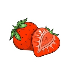 Strawberry on white background vector image