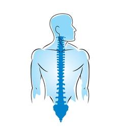 anatomy of human spine vector image