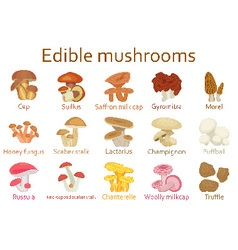 Edible mushrooms flat icon set vector