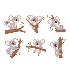 koala bear wildlife cute furry animal from vector image