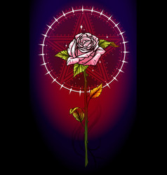 pink rose flower with pentagram star vector image