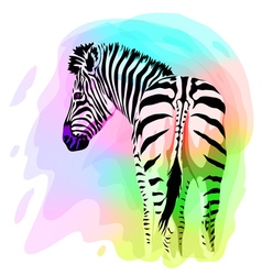 Rainbow Zebra portrait Watercolor imitation vector image