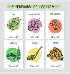 set 6 card templates with hand drawn superfoods vector image