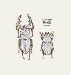 Tokara red stag beetle hand draw sketch vector