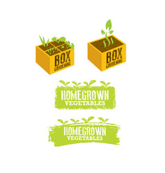 box gardening sign concept homegrown vegetables vector image
