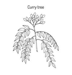 Curry tree murraya koenigii medicinal plant vector