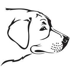 retriver dog vector image