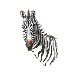 Zebra head vector