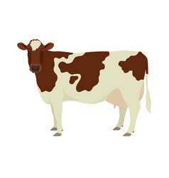 Ayrshire cattle flat isolated vector