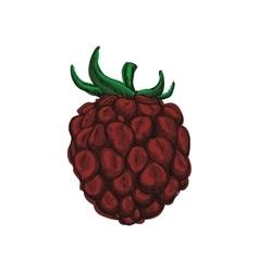 Blackberry icon Fruit design graphic vector