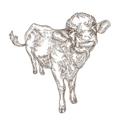 hand drawn cow isolated on white background farm vector image