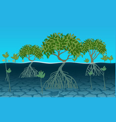 landscape mangrove forest at beach vector image