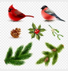 winter birds fir branches set vector image