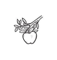 apple harvest hand drawn sketch icon vector image