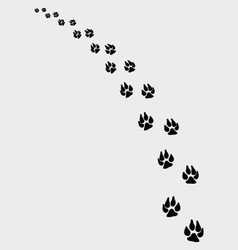 dogs footprints 2 vector image