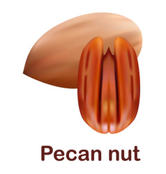 pecan nut icon realistic style vector image