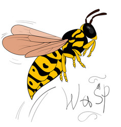 Cartoon wasp flies isolated on white vector