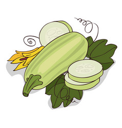 Isolate courgette or zucchini vector