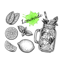 lemonade and ingredients vector image