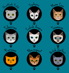 Nine cat breeds in cute cartoon style with names vector
