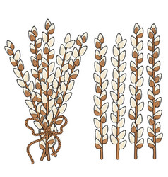 Set willow branches vector