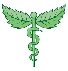 caduceus with leaves vector image