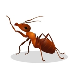 Cartoon realistic ant isolated on white One leg vector
