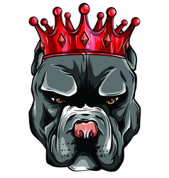 Pitbull in crown on white background vector
