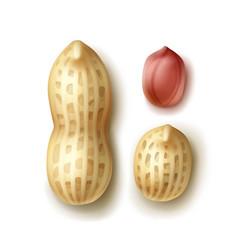 set of peanuts vector image