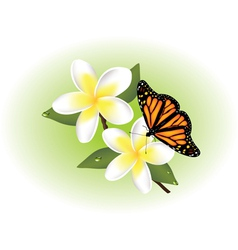 frangipani and butterfly vector image