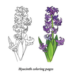 hyacinth coloring pages vector image vector image